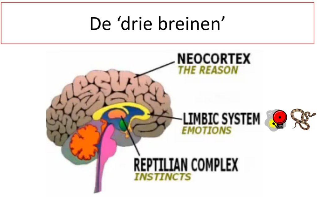 drie breinen trauma