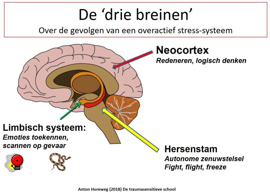 Horeweg, A. (2018).De traumasensitieve school: overactief stress-systeem